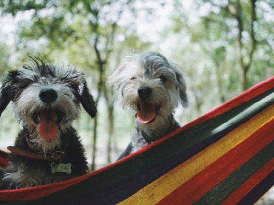 assurance animal de compagnie - Blog Sfam